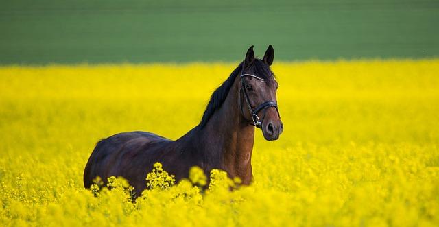 Прогулки на лошадях, верховая езда во Львове